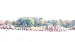 Tưng bừng lễ Hội đua thuyền trên Sông Hương