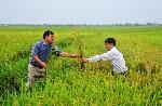 """Thừa Thiên - Huế: Nông dân """"kêu trời"""" vì nguy cơ mất mùa"""
