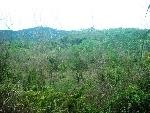 TT Huế: Rừng bị tàn phá sau khi giao cho cộng đồng quản lý