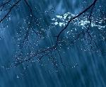 Nghe mưa phiên dịch