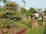 Huế: Nơi hội ngộ của cây kiểng 3 miền