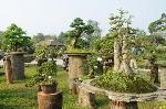 Trao giải 75 tác phẩm nghệ thuật cây kiểng đặc sắc nhất