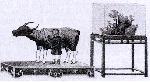 Tục tế thần trâu dưới thời Nguyễn