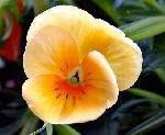 Hoa bên trời