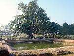 Sang Lâm Tì Ni, nơi sinh Đức Phật