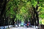 Huế: Ứng dụng phần mềm Mapinfo trong quản lý cây xanh