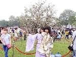 Trưng bày 12.000 cành hoa anh đào tại khu vực Tượng đài Lý Thái Tổ