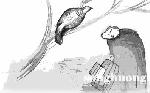 Con chim cu cườm