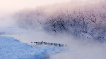 Tuyết ca
