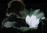 Chùm thơ Trần Quốc Toàn