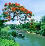 Khúc tình tự dòng sông