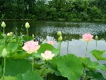 Chùm thơ Hồ Phi Phục