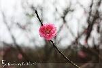 Xuân không mùa