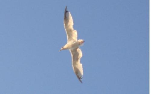 Đường chim bay