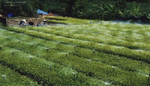 Thừa Thiên Huế và chương trình Nông Thôn Mới: