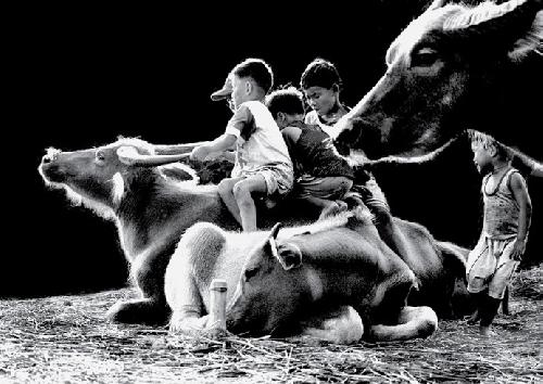 Tuổi thơ chăn trâu