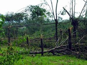Nam Đông: Bão số 8 gây thiệt hại gần 2 tỷ đồng