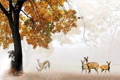 Ký ức mùa thu