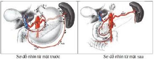 """Nghiệm thu đề tài """"Nghiên cứu ứng dụng phẫu thuật nội soi cắt dạ dày kèm vét hạch D2 kết hợp hóa-xạ trị trong điều trị ung thư dạ dày"""""""