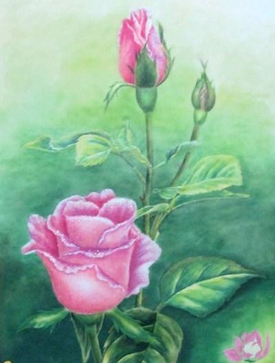 Bông hồng nở