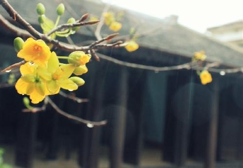 Để lại Huế mùa xuân