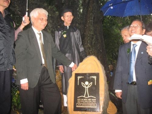 Vinh danh cây di sản ở Huế