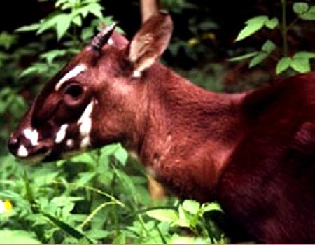 Hỗ trợ 8,2 triệu Euro cho khu bảo tồn đa dạng sinh học rừng miền Trung